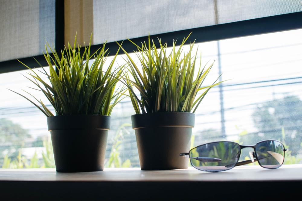 Utiliser des plantes vertes à la maison