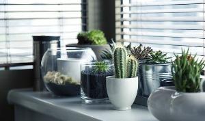 maison avec des plantes d'intérieur
